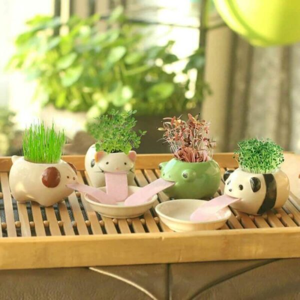 MINI WATERING CERAMIC FLOWERPOT