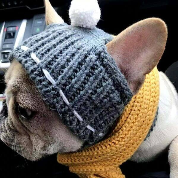 WINTER WOOLEN HAT FOR FRENCH BULLDOG