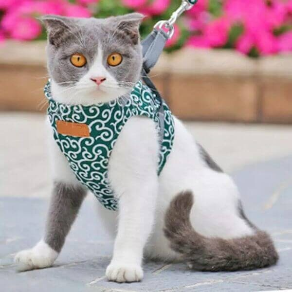 CAT OUTDOOR WALKING VEST HARNESS AND LEASH SET