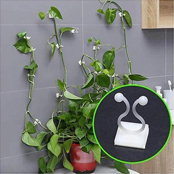 PLANT WALL CLIMBING CLIPS